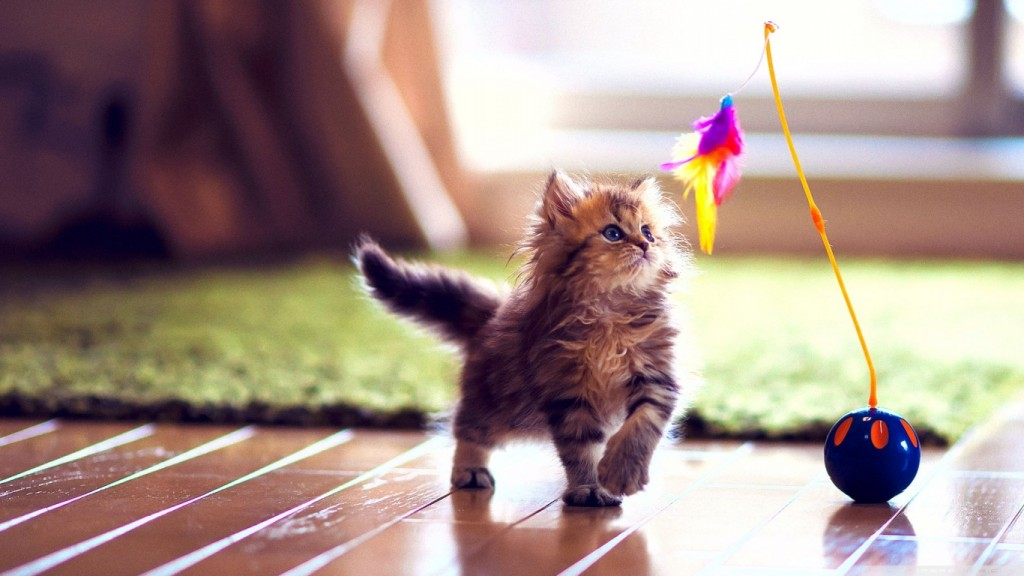 Cute Wallpapers HD 1366x768 3
