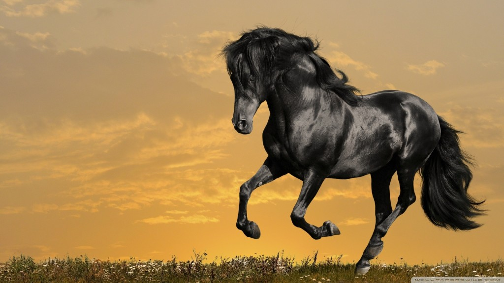 Desktop-Horse-Wallpaper-HD-1920x1080-1-1024x576