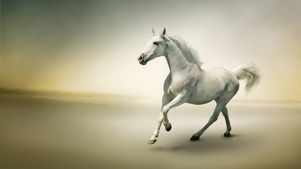 Desktop-Horse-Wallpaper-HD-1920x1080-10-1024x576