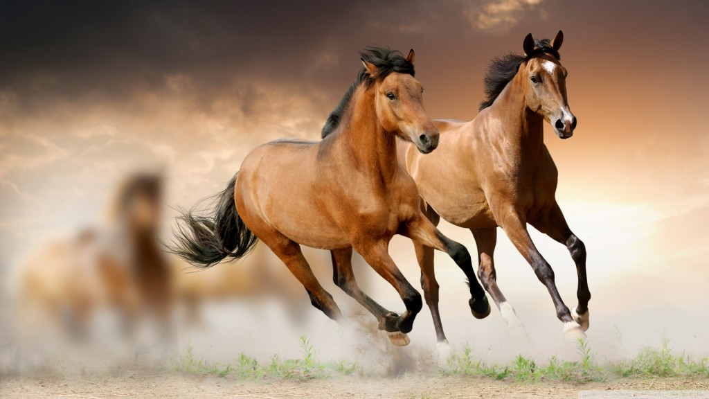 Desktop-Horse-Wallpaper-HD-1920x1080-2-1024x576