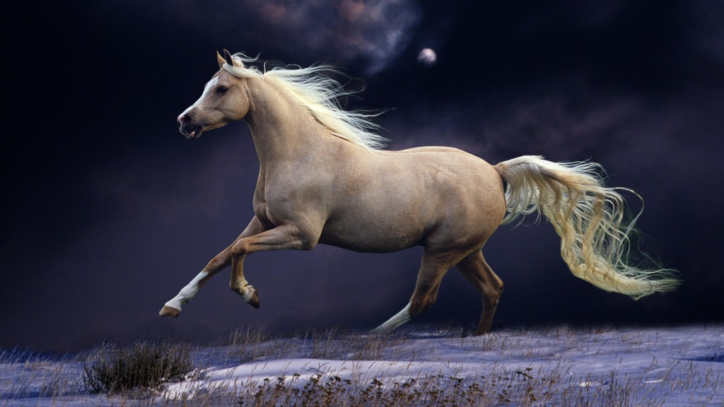 Desktop-Horse-Wallpaper-HD-1920x1080-4-1024x576