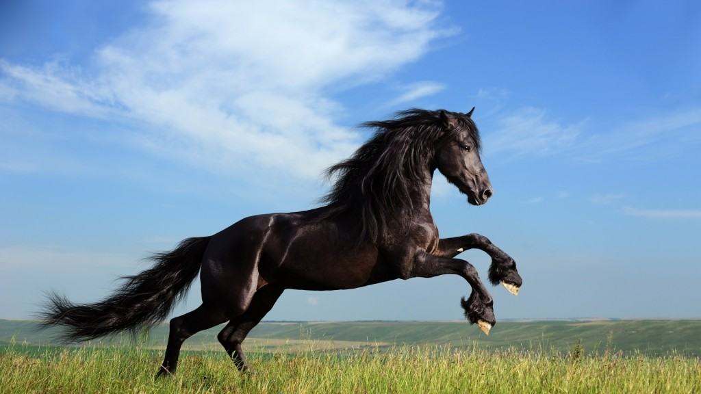 Desktop-Horse-Wallpaper-HD-1920x1080-5-1024x576