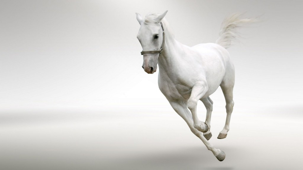 Desktop-Horse-Wallpaper-HD-1920x1080-7-1024x576