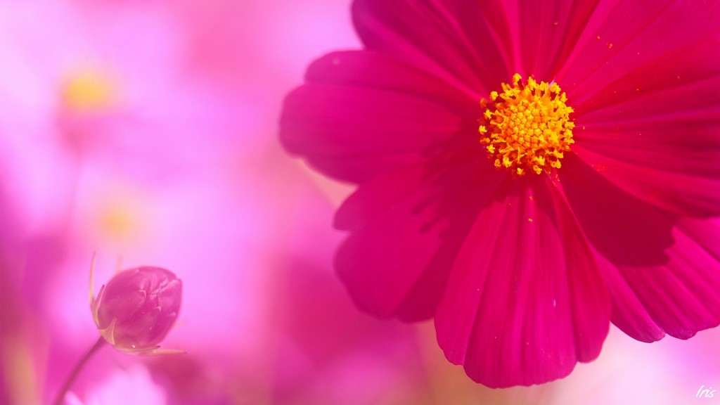 Desktop Pink Wallpaper HD 1920x1080 3