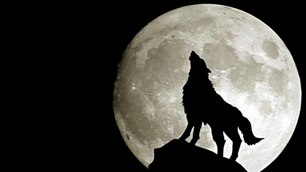 Desktop-Wolf-Wallpaper-HD-1920x1080-7-1024x576