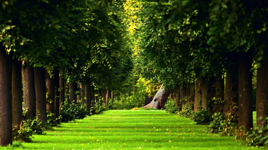 Nature-Green-Wallpaper-HD-1366x768-6-1024x576