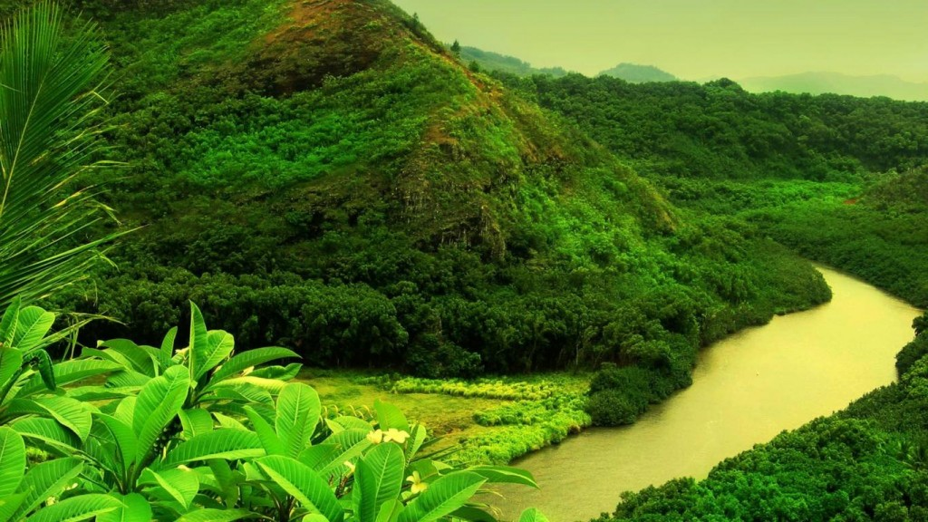 Nature Green Wallpaper