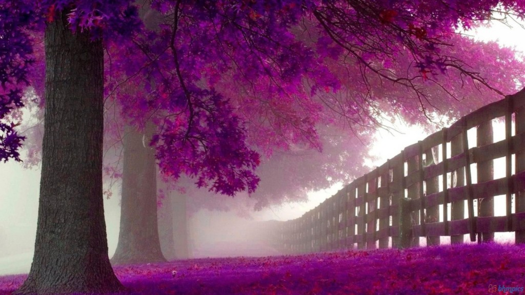 Purple Wallpaper HD 1920x1080 2