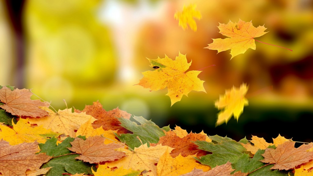Season-Fall-Wallpaper-HD-1920x1080-11-1024x576