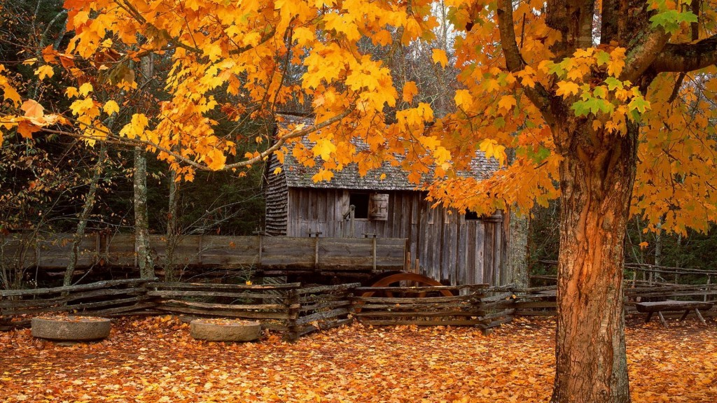 Season-Fall-Wallpaper-HD-1920x1080-2-1024x576