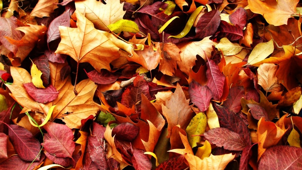 Season-Fall-Wallpaper-HD-1920x1080-6-1024x576