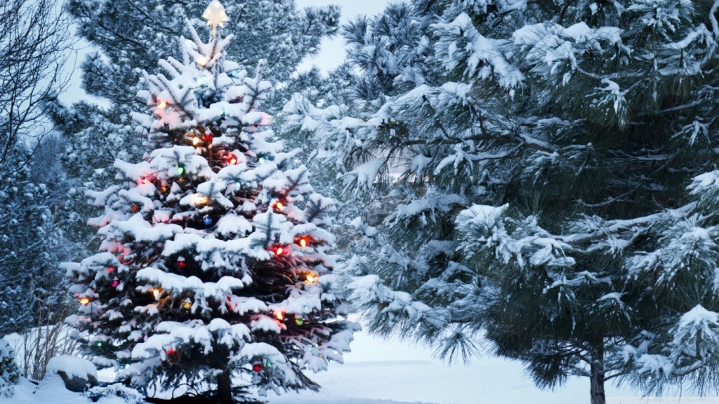 Christmas-Background-Wallpaper-HD-beautiful_outdoor_christmas_tree-wallpaper-1366x768-1024x576