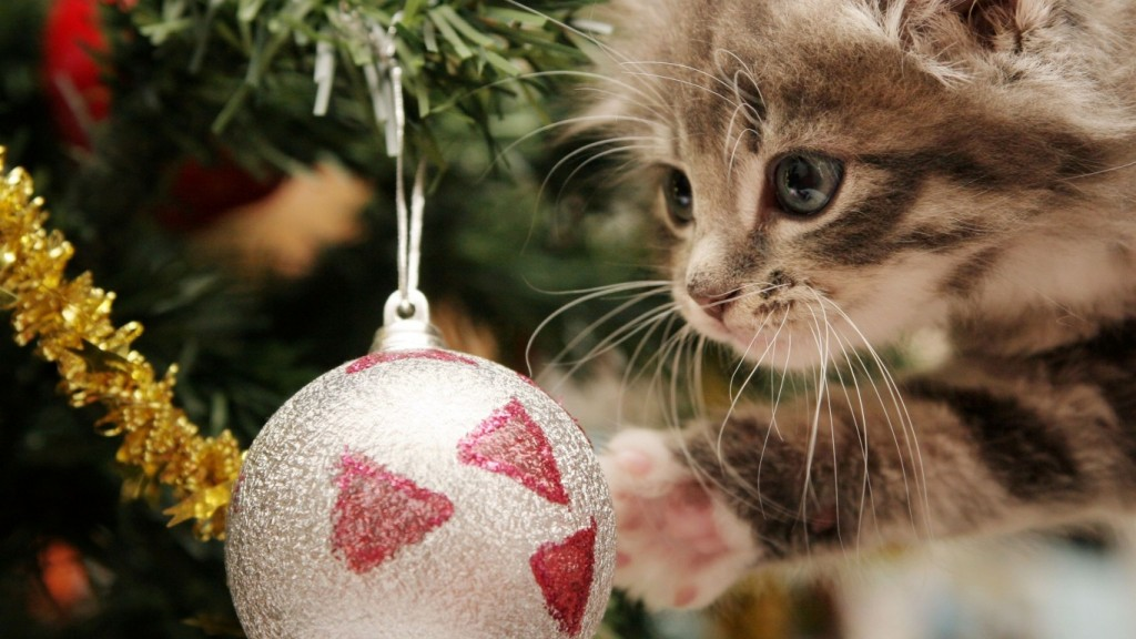 Christmas wallpaper-Cat-1366x768