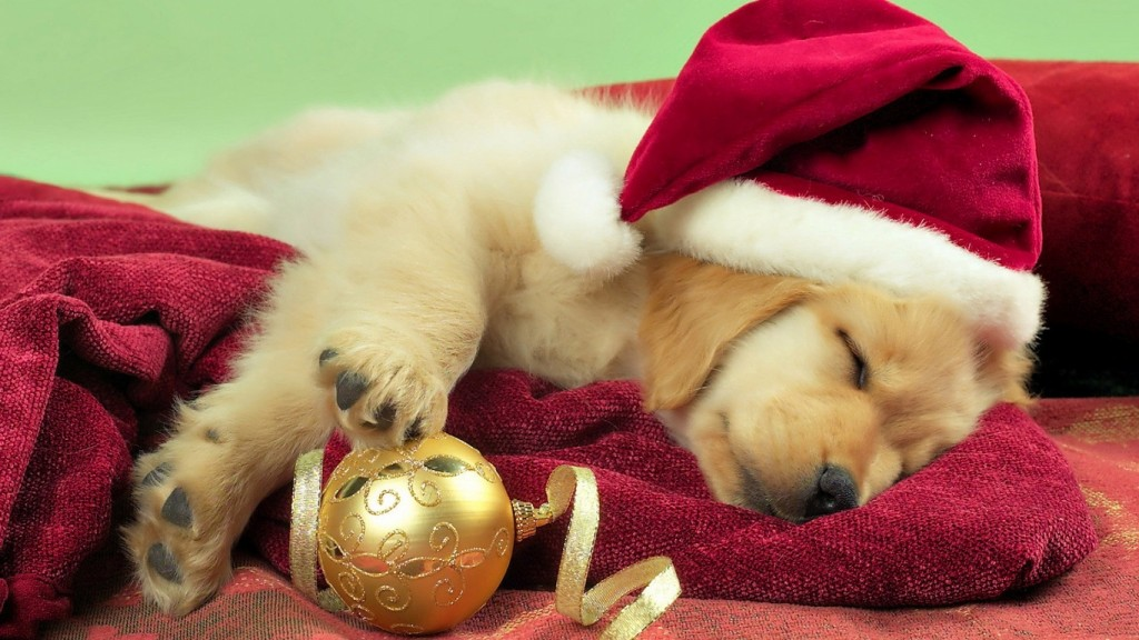 Christmas wallpaper Puppy-Christmas-Gift-1366x768