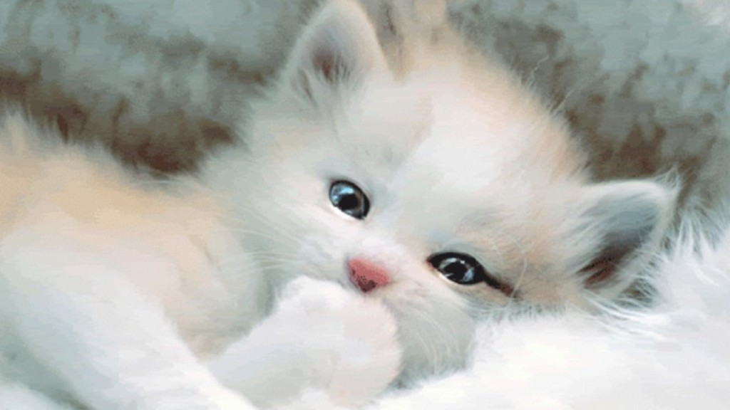 Cute Desktop Backgrounds Wallpapers desktop-pics-of-cute-kittens-and-cats