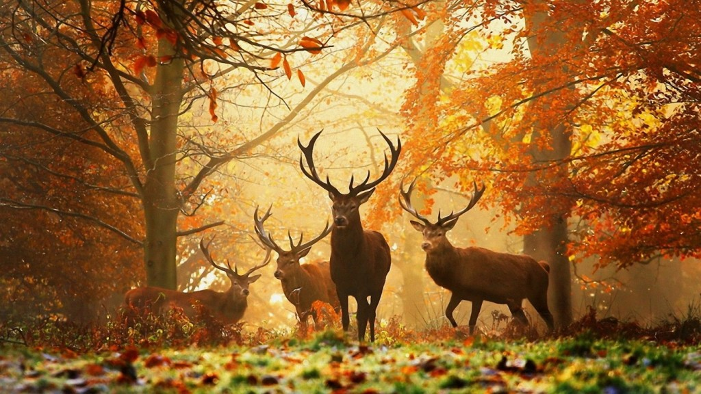 Desktop Fall Background Wallpaper HD 1366x768 Deer-in-Autumn-Wide-For-Wallpaper-HD
