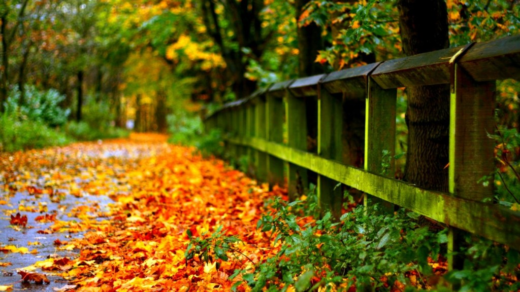 Desktop Fall Background Wallpaper HD 1366x768 autumn-leaves-on-road-hd-for-desktop-widescreen-wallpaper-download-1366x768