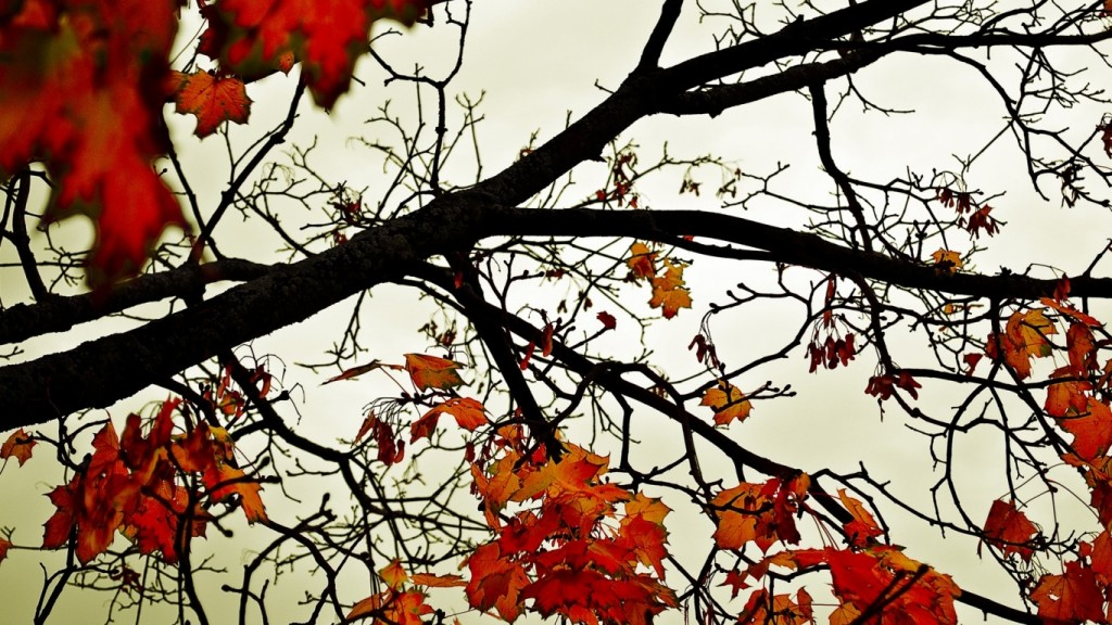 Desktop Fall Background Wallpaper HD 1366x768 autumn-leaves-wallpaper-desktop