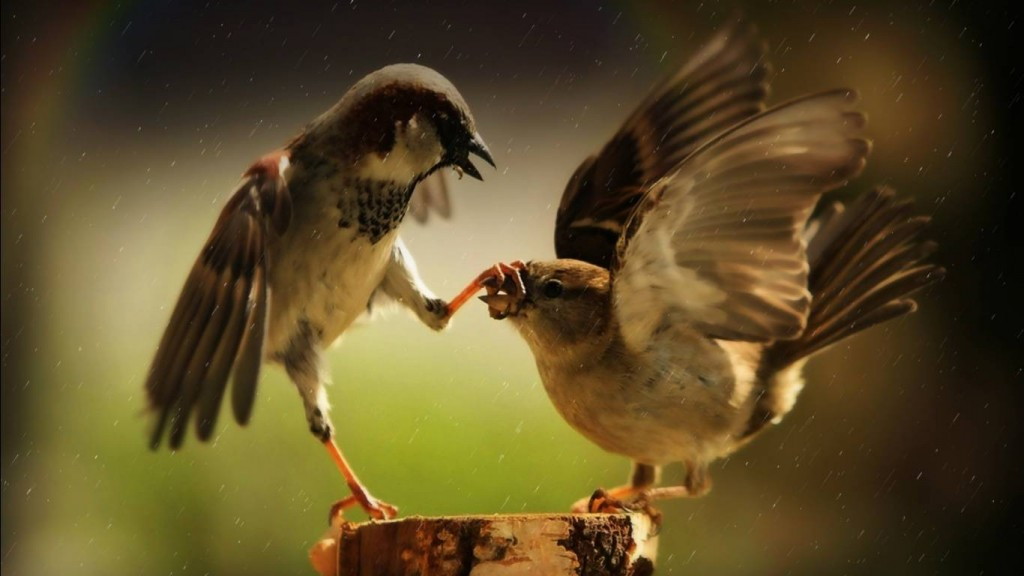 Desktop Funny Wallpapers HD funny-birds-funny-wallpapers