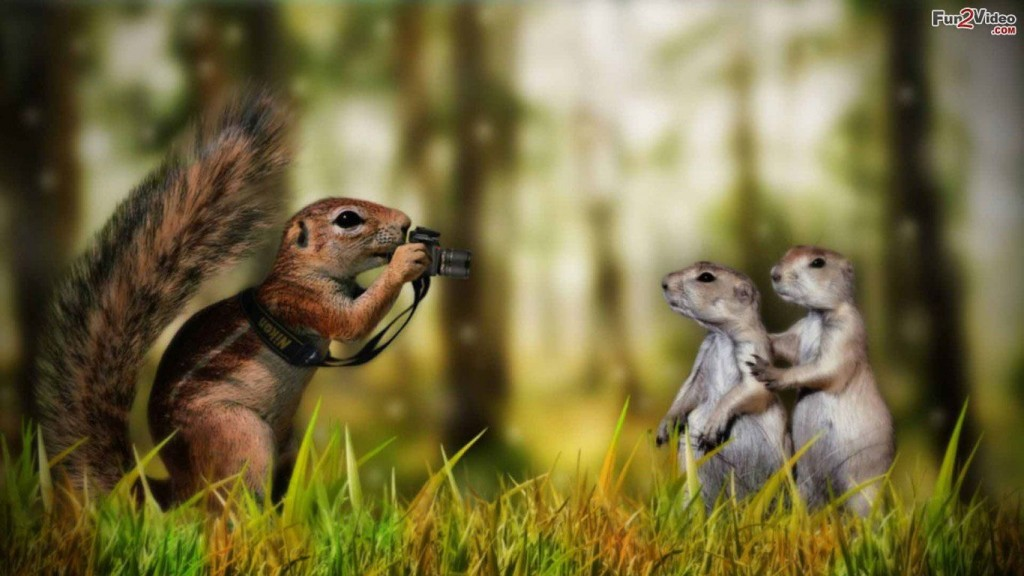 Desktop-Funny Wallpapers HD Eichhörnchen-funny-Tapete
