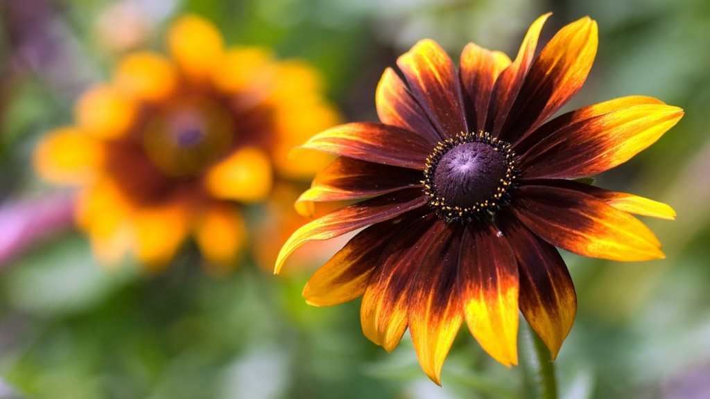 Desktop-HD-Blumen-Tapete schön-flower-wallpaper-1366x768