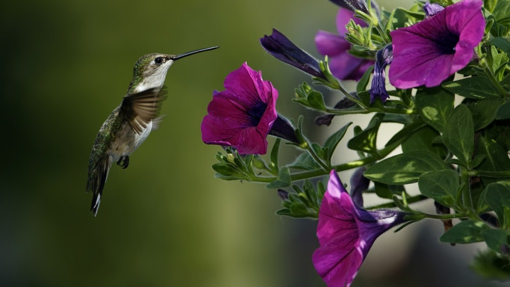 Desktop HD Flower Wallpaper colibri-flowers-1366x768
