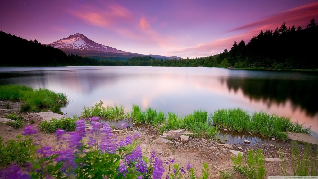 Desktop-HD-Blumen-Tapete mountain_lake_and_flowers-wallpaper-1366x768