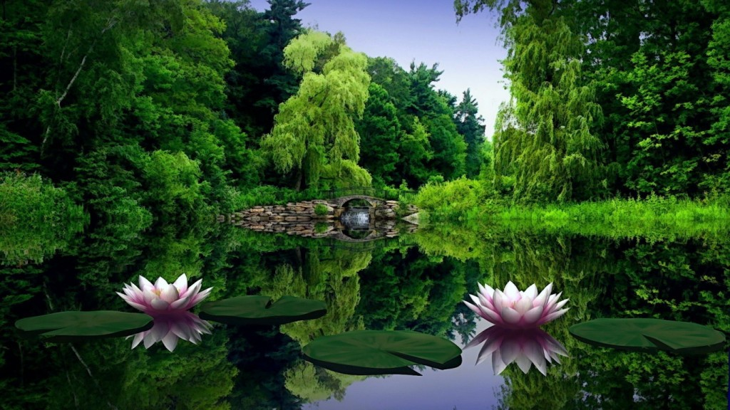 Desktop-HD-Blumen-Tapete water_lilies_water_leaves_pond_bridge_trees_beauty_green_nature_30352_1366x768
