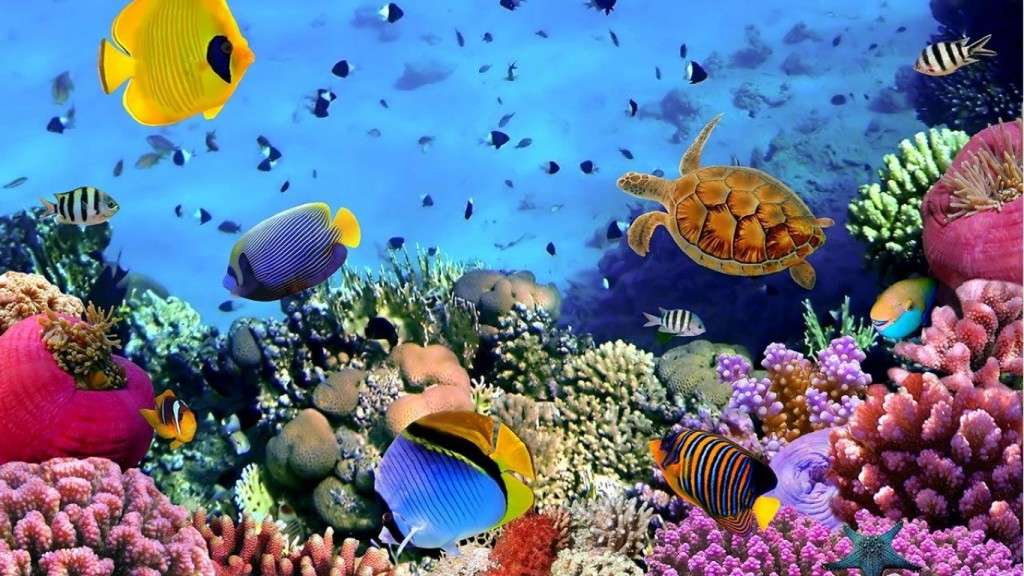 Desktop Live Wallpaper HD 1366x768 fish