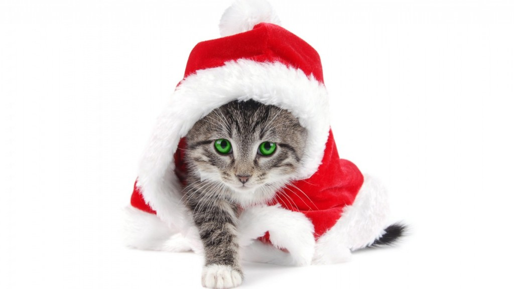 HD-Desktop-Christmas-Wallpaper-christmas_cat_wallpaper_1366x768-1024x576