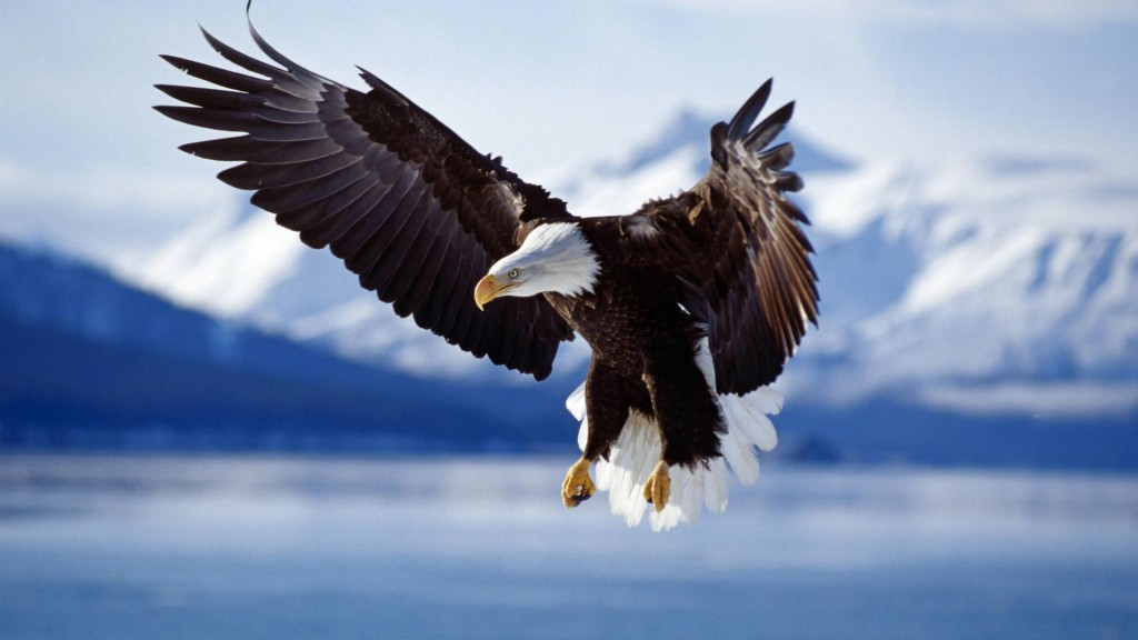 Animals-wallpaper-HD-eagle-1024x576