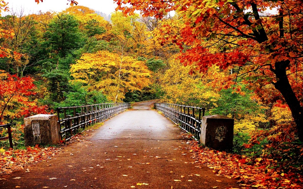 automne wallpapers5