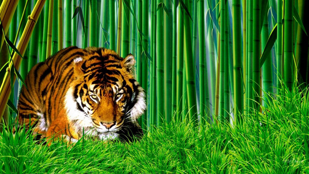 Bamboo-wallpaper-1024x576