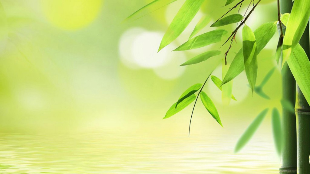 Bamboo-wallpaper2-1024x576