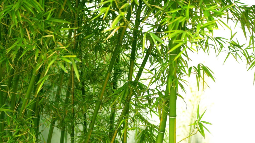 Bamboo-wallpaper3-1024x576