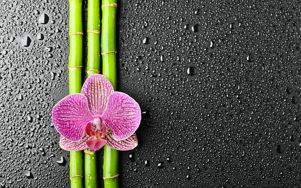 Bamboo wallpaper5