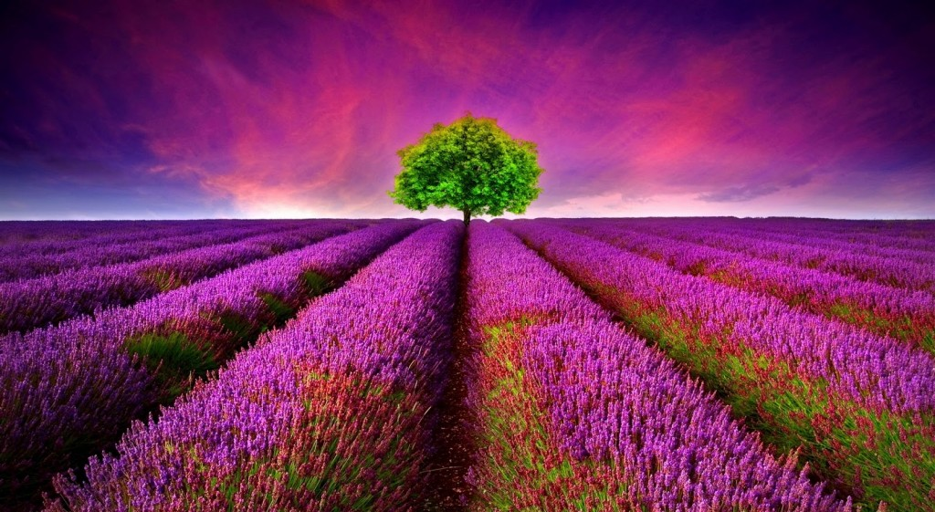 Beautiful nature wallpaper3
