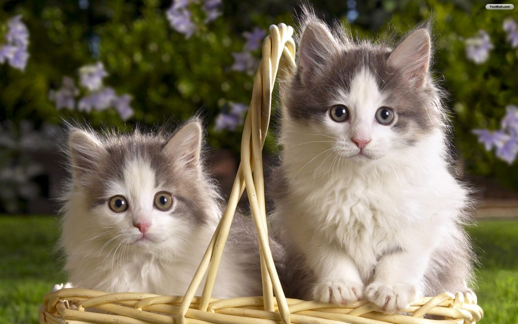 Cats-wallpaper2-1024x640