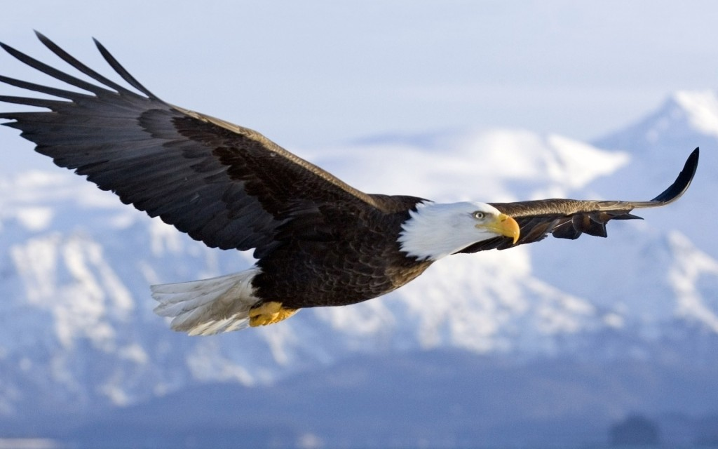 Eagle-wallpaper-1024x640