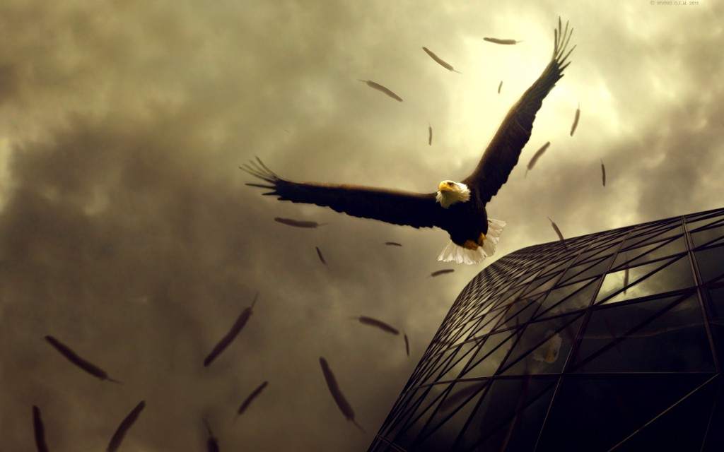 Eagle wallpaper2