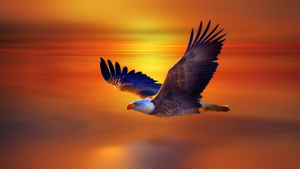 Eagle-wallpaper6-1024x576