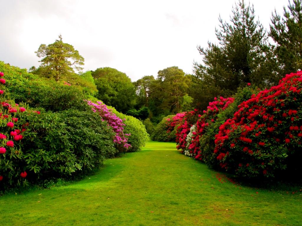 Garden wallpaper3