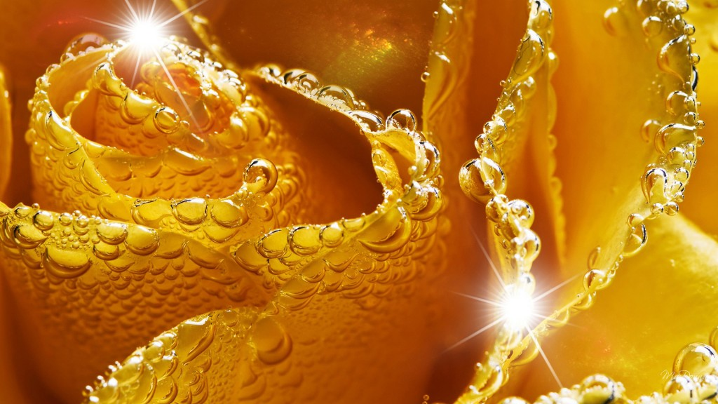 Golden-wallpaper6-1024x576