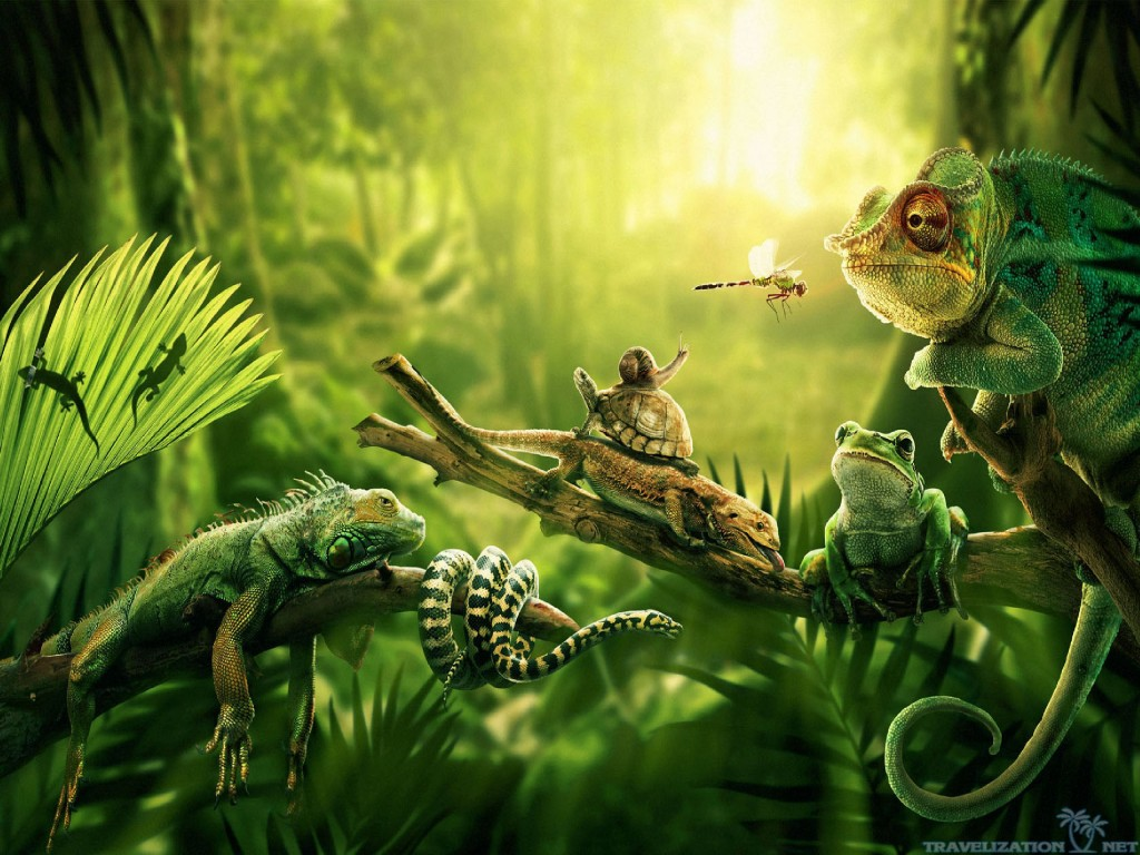 Jungle-Wallpaper-Collections-1024x768