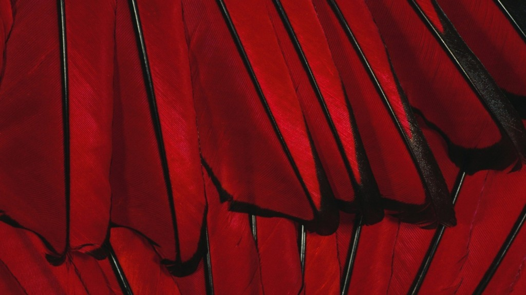 Red-and-black-wallpaper6-1024x576