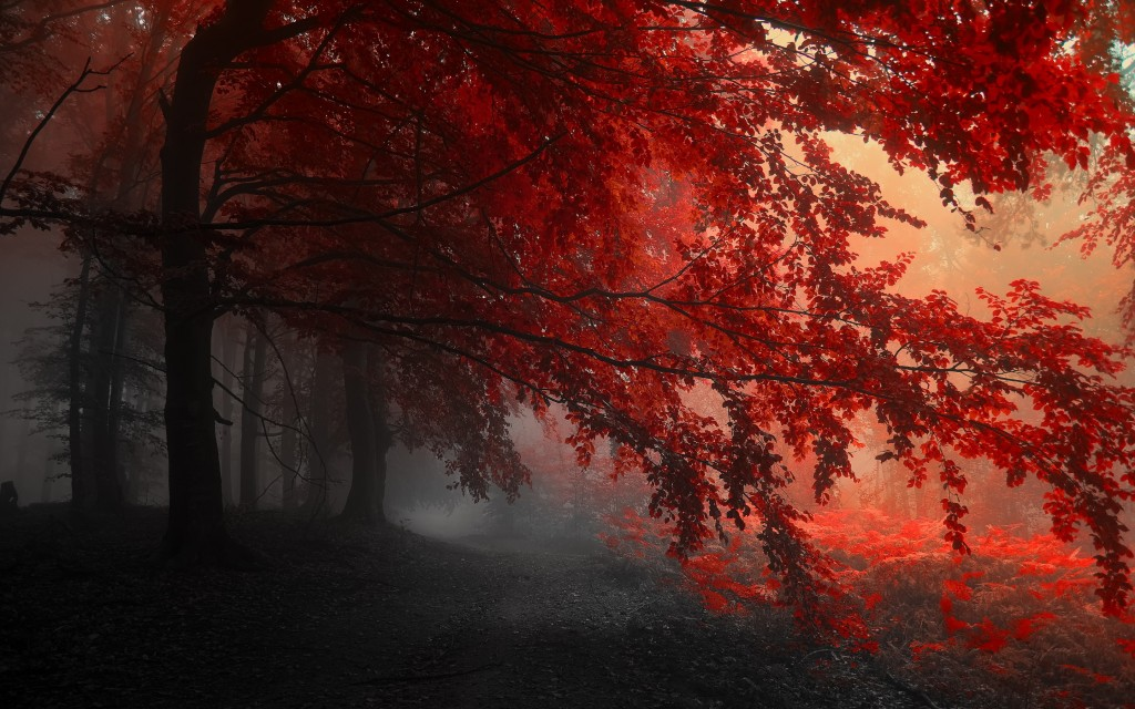 Red wallpaper hd2