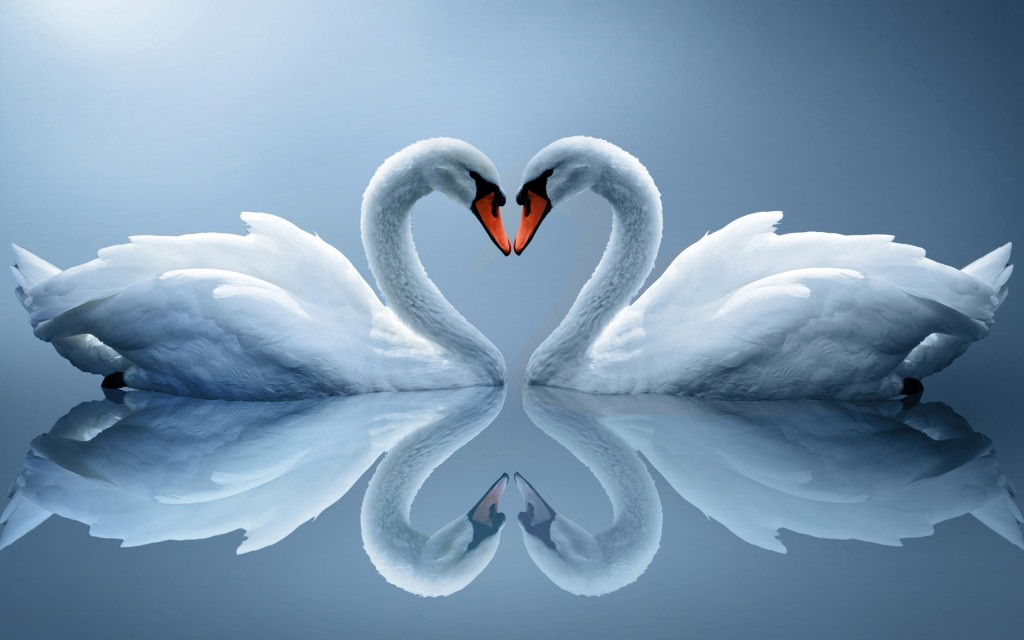 amor wallpapers 3