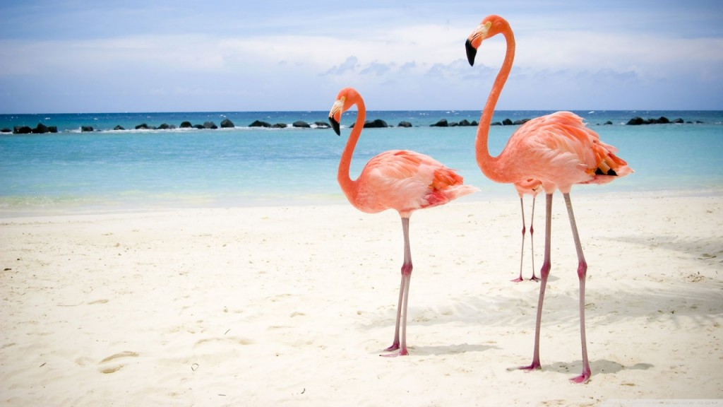flamingo_birds-tapetti-1280x720