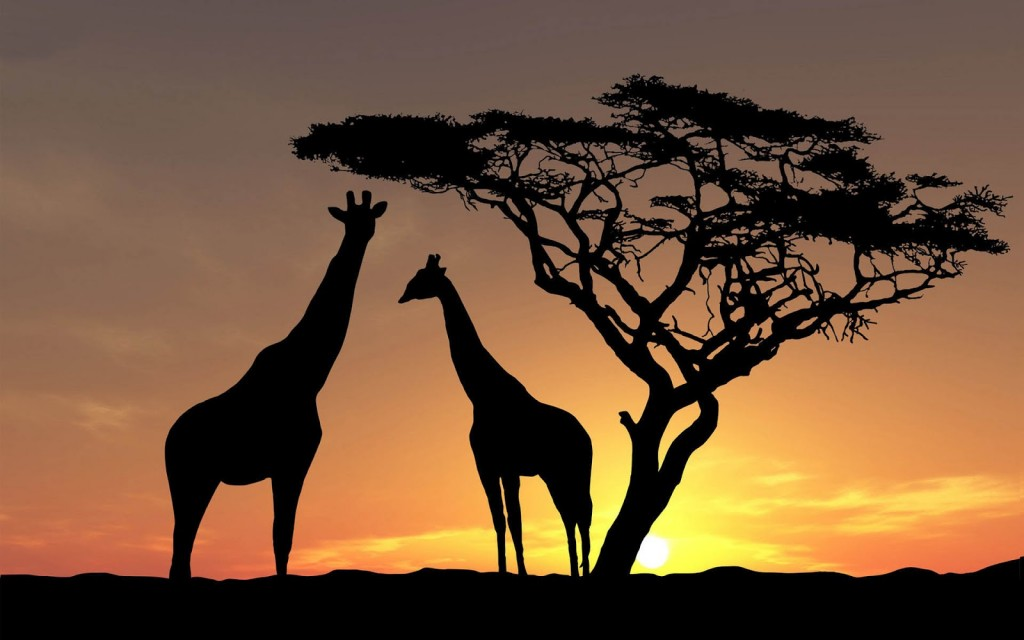 giraffe wallpaper2