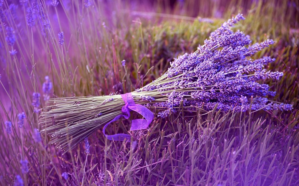 lavender wallpaper4